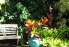 Abbotsbury Tropical landscaping 11